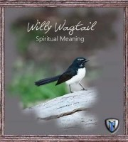 willy wagtail spiritual meaning