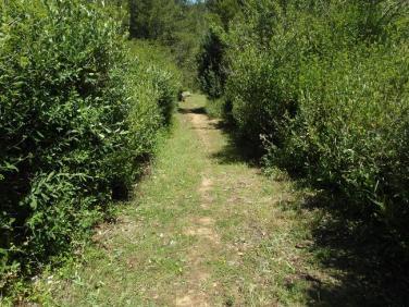 Sentier Francis Lastenouse - travaux 12.06.13 - 3