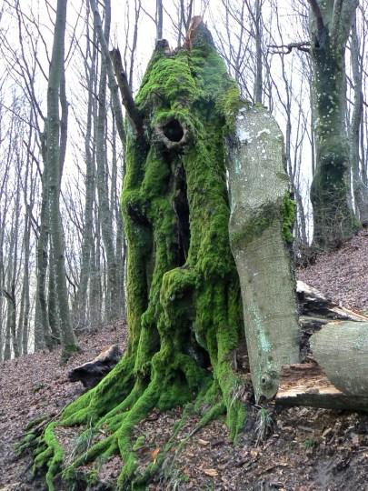 Magici alberi antichi