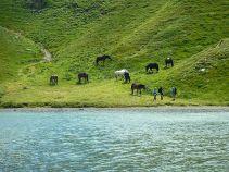 Cavalli sul lago Scaffaiolo