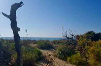 Le dune di San Rossore