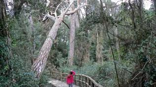 Passerella nel bosco
