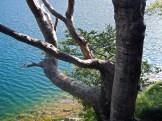 I faggi e il lago