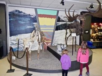 Museo Donini, megafauna delle glaciazioni