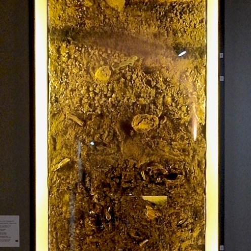 Al Museo Archeologico del Casentino di Bibbiena si può vedere uno spaccato dello scavo del Lago: chi riesce a vedere una statuetta tra i sedimenti?