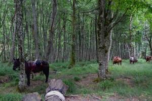 Alla Lama c'è chi arriva anche a cavallo