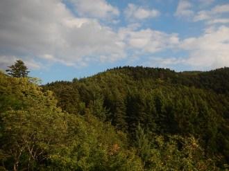 Le foreste di Vallombrosa
