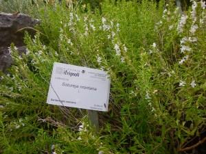 Rocce e piante al bioparco di Frignoli