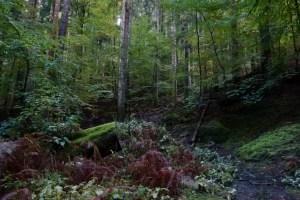 La foresta di Vallombrosa in autunno è davvero simile alle foreste pluviali dell'Oregon