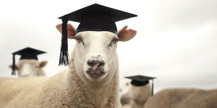 blog_sheep