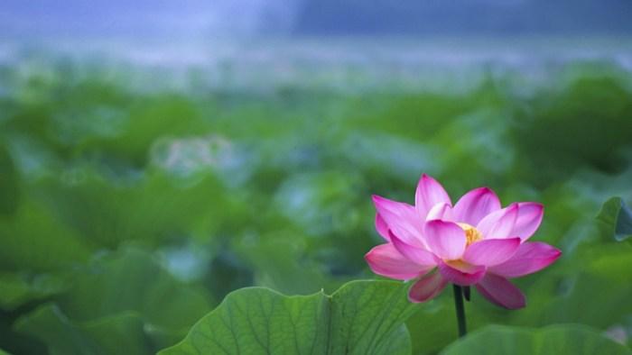 lotus-flower-buddha-tattoo-wallpaper-4.jpg