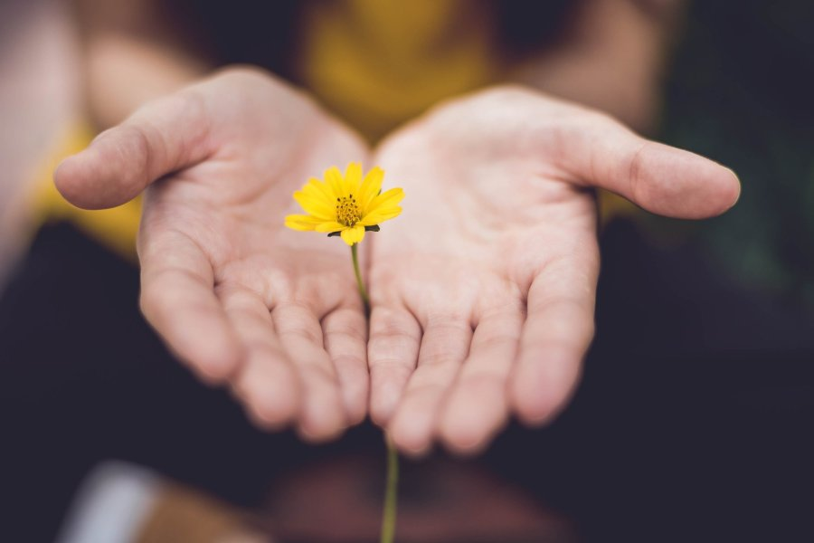 image of hands and flower