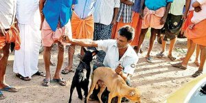 kerala-strangles-stray-dogs-flouting-sc-order-with-20-choked-to-death-in-ernakulam-and-100-killed-in-palakad-indialivetoday