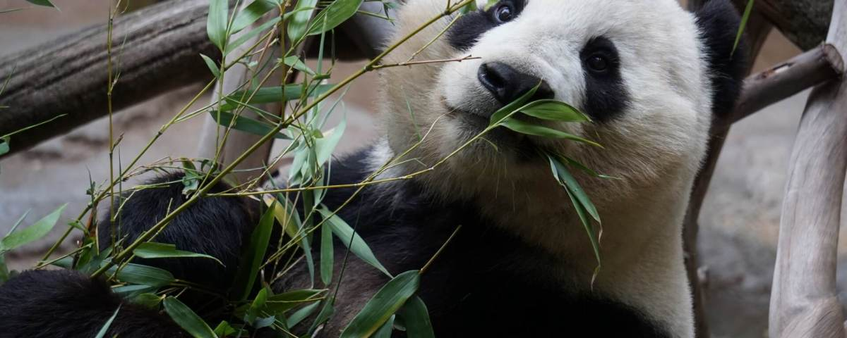 Google Panda 3.3: Why Your Rankings Dropped and How to Recover