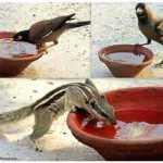 भूख!!!!!! – Shailendra Kumar Mishra