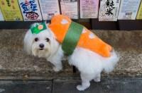 Halloween: Dog Sushi | Seoul Searching