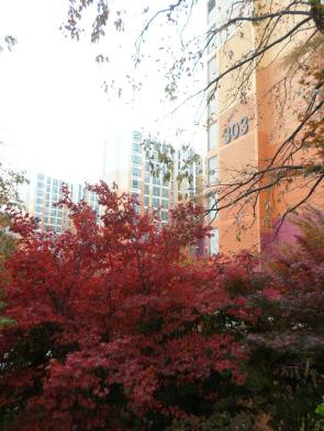 Pretty fall colors--the day before test day