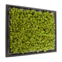 Preserved Lichen Moss Wall Art in Frame 20in. x 24in.