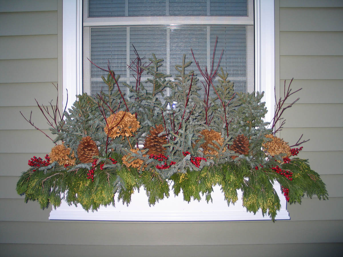 Window Boxes in the Winter Article. How and What to do