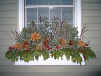 Window Boxes in the Winter Article. How and What to do ...