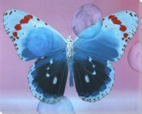 Blue with Red Butterfly Study Wrapped Canvas Giclee Print ...