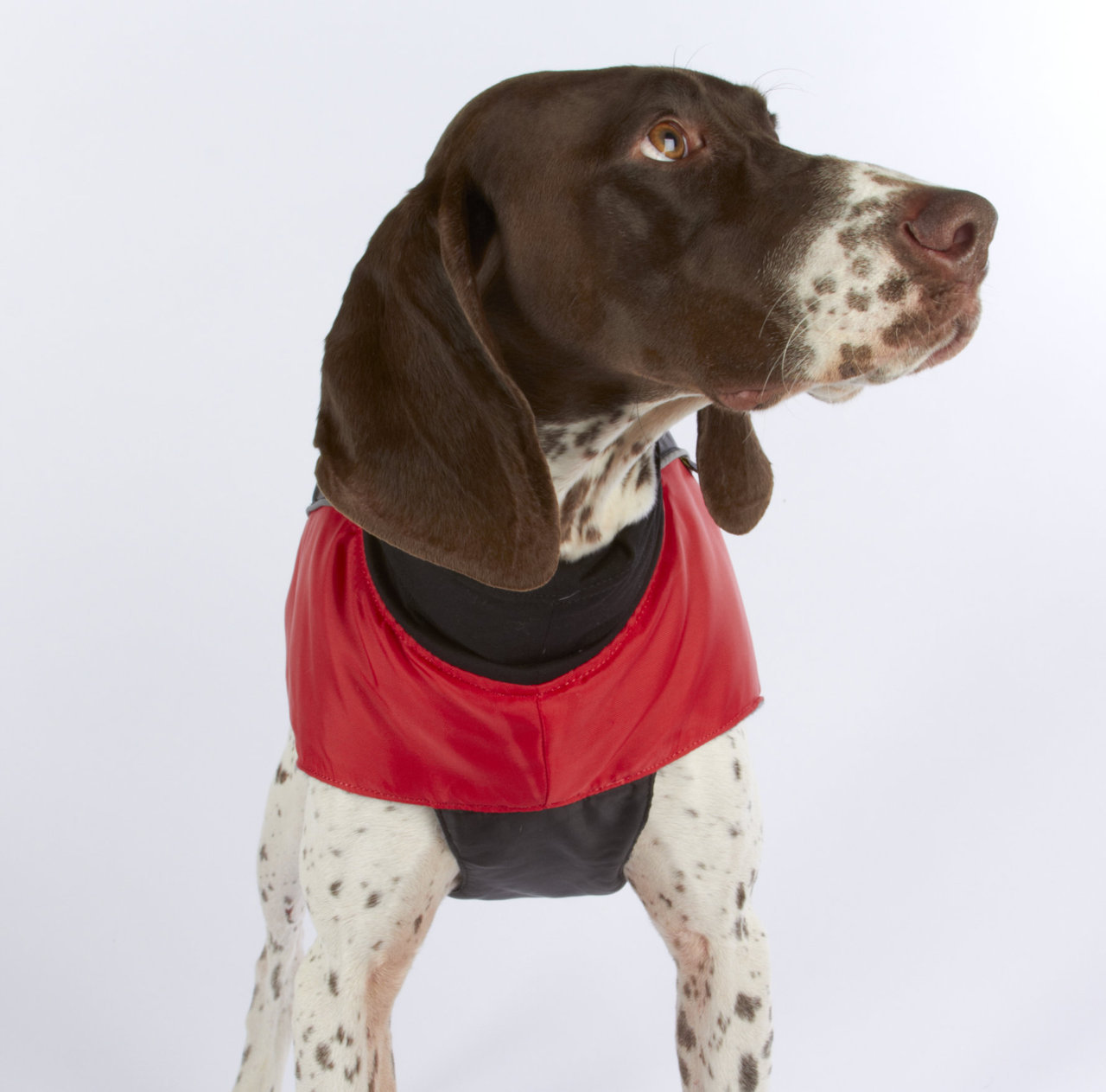 Ultra Paws Coat (Discontinued
