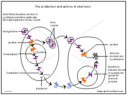Microbiology Illustrations for Presentations and Publications