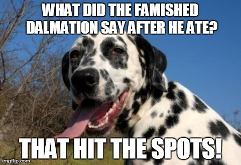 Image result for humour about pets