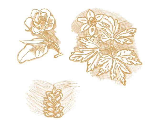 flowers da Vinci by sepia flora