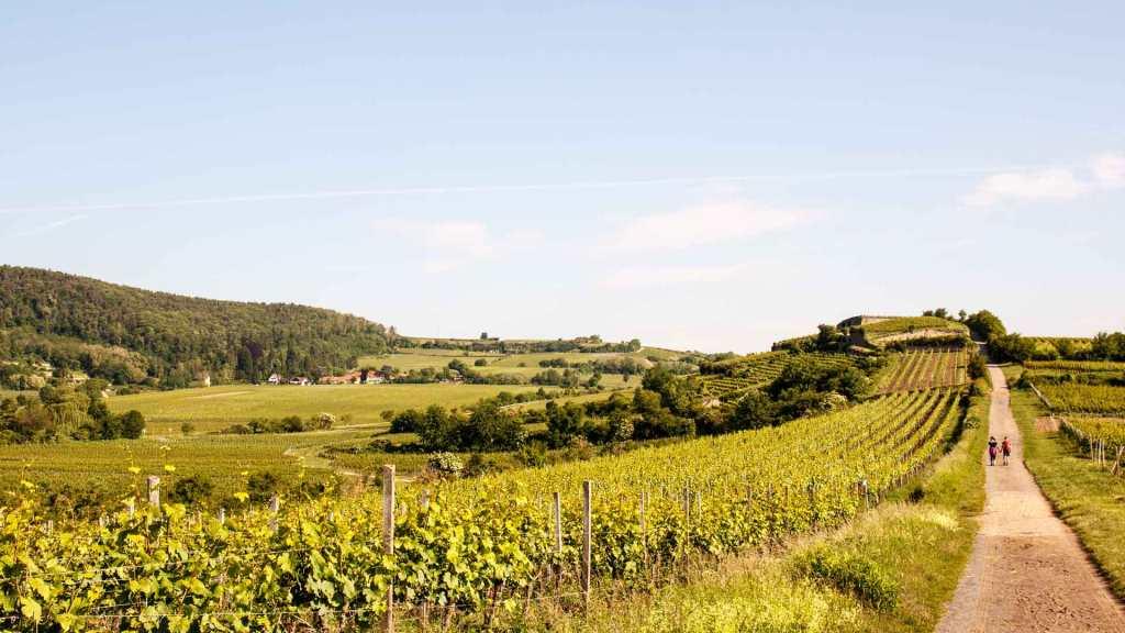 Wandern Pfalz Rundwanderwege