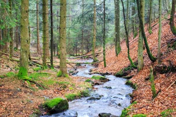 Wandern Kandel Schwarzwald Sankt Peter