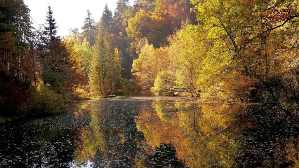 Hornesselwiese Forsthaus Taubenwohl Stilles Tal