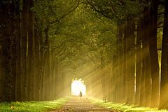 walking-in-the-light
