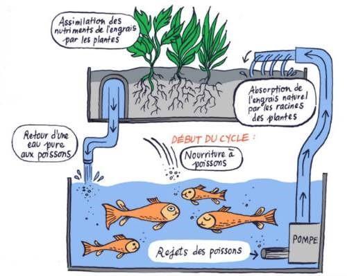 Microécosystème aquaponique automatisé (MAA) – Première partie ...