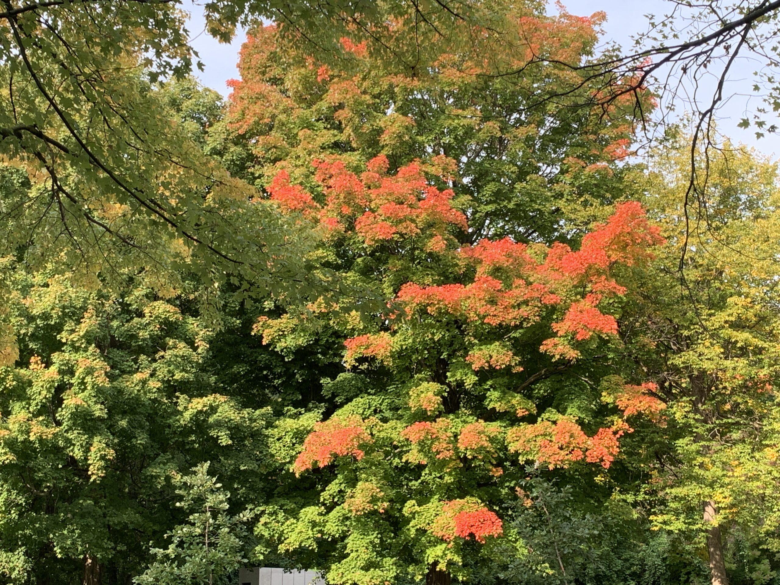 莫让最美的秋天从指缝间溜走!《秋之韵视频大赛》邀您一起赏枫追秋嗨起来