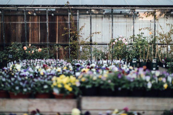 millie-dan-petersham-nurseries-0251