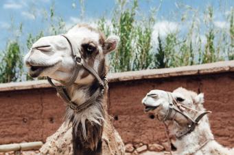 Kasbah Tamadot wedding dreams | Atlas Mountain honeymoon, Morocco