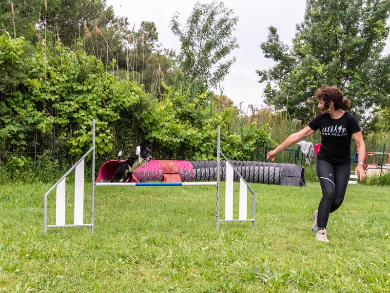 photo agility compétition