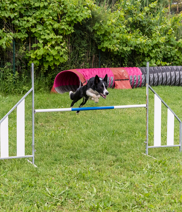 photo agility compétition