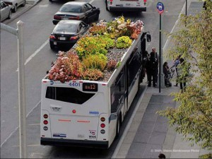 bus green roof