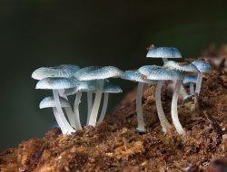 Apa Peranan Dekomposer dalam Ekosistem? Simak Penjelasannya Disini!