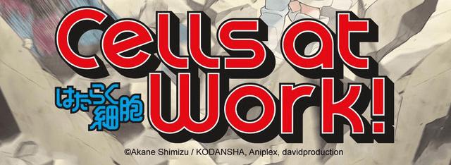 Risultati immagini per cell at work anime