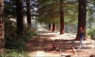 Sequoia-avenue-boys-and-dogs_thumb.jpg