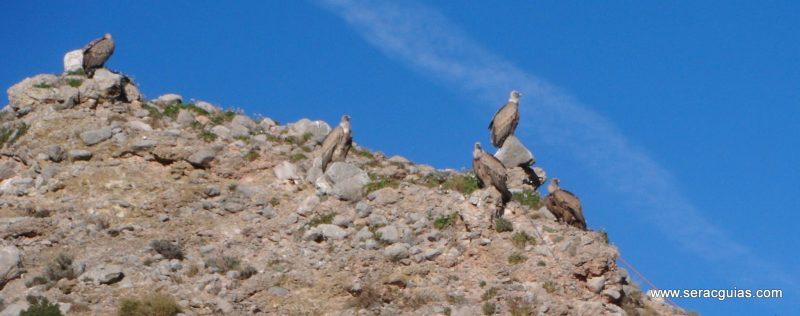 escalada Galletas Fire Riglos 8 SERAC COMPAÑÍA DE GUÍAS