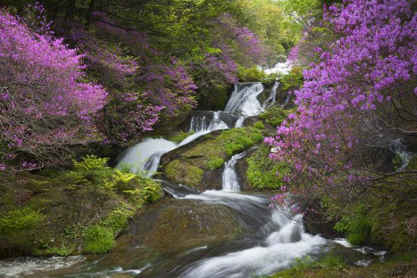 リサイズ絶景①竜頭の滝とツツジ_MG_1848-2