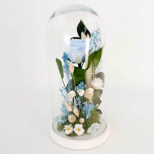 Cúpula Rosa Preservada Azul
