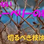 【前記事補足】迷わないブルーベリーの剪定 切るべき枝はコレ!