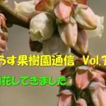 せらす果樹園通信 Vol.7 開花してきました。