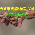 せらす果樹園通信 Vol.8 開花は小休止