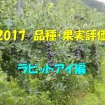 2017 品種・果実評価 ラビットアイ編